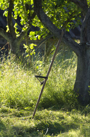 Vintage russian scythe is near the apple-tree after a mowing in the sunny evening against a background of a meadow Imagens