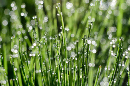Stems of horsetail with dew drops and bokeh beautiful summer morning Stock Photo