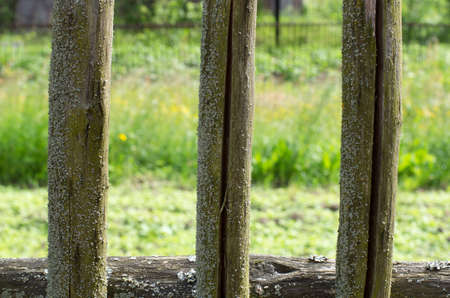 uncomplicated: Fragment of moss-covered wooden fences of the three pegs in the cracks in the old Russian style