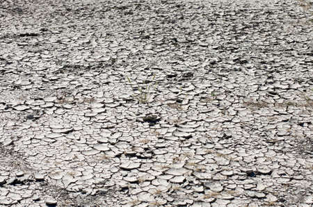 The dry stratified earth in cracks with the dried-up plants in sunny summer day