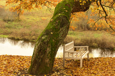 Bench Onegin (without trademark or copyright) near the old oak during Indian summer . Onegin - literary hero of the writer of the 18th century Alexander Pushkin. Stockfoto