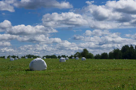 Summer landscape with rolls of hay in plastic packaging on the background of the sky with clouds