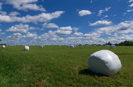 In the foreground there is a large roll of hay in plastic and in the distance there are many rolls in a summer meadow