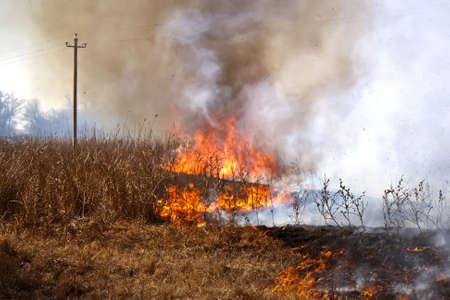 arbol de problemas: La hierba seca en el campo quemaduras inflada por un fuerte viento