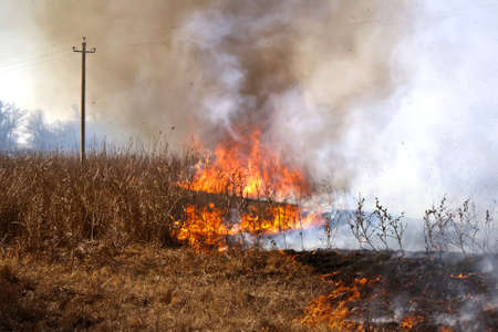 The dry grass in the field burns inflated by a strong wind