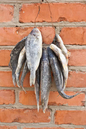 Dried fish strung on a wire against a brick wall