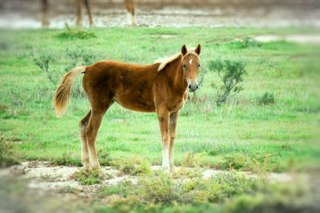 Foal grazing in desert steppe in the late autumn photo