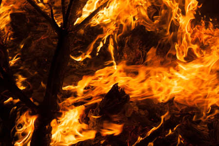 Night fire flames burning on the branches of a tree Stock Photo
