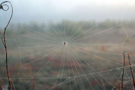 Closeup spiders web in the fog early autumn morning photo