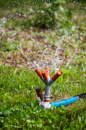 Jets of water from a garden sprinkler water tied to a wooden peg