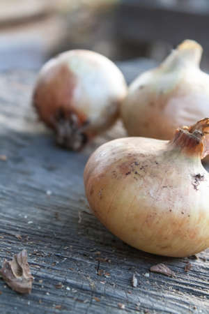 Onion on a wooden surface