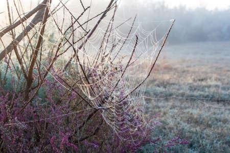 Autumn cobwebs on bushes Stock Photo