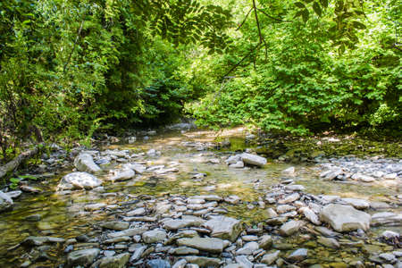 Quiet mountain river slowly flowing in a mountain forest