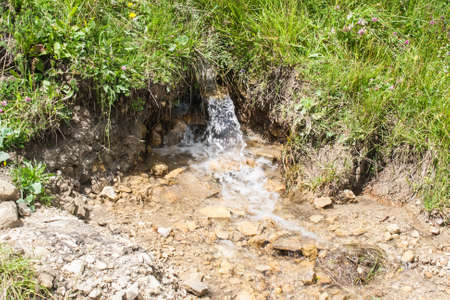 A small spring current among the grass in the summer Stock Photo