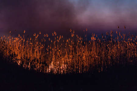 Night fire in the dry reed beds of dried-up winter Stock Photo