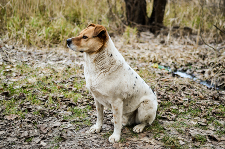 Side view of the beautiful stray dog sitting on the ground in the autumn Stock Photo