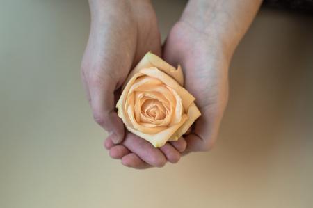Female hands holding rose flower. Healthcare concept.