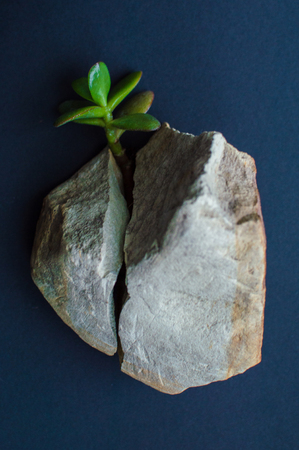 Rock split in two parts by the small green succulent plant. Dark blue, close to black background. Concept of ecology, environment, green energy, Earth day. Stock Photo
