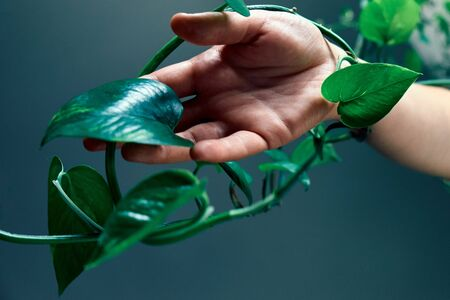 Female arm touching the clambering plant. Concept of the environment protection, care, greenhouse effect.