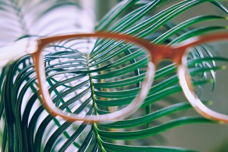Close-up view of the exotic house plant branch through the glasses. Concept of the environment protection, care, greenhouse effect.