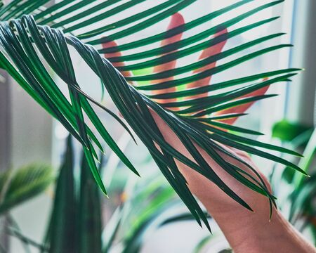 Side view of the female arm touches a branch of the exotic house plant. Concept of the environment protection, care, greenhouse effect.