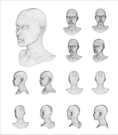 countenance: Wireframe head 3d model vector illustration Illustration