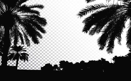 Palm trees vector silhouette. Coconut palm tree with coconuts vector. Beach vector trees.