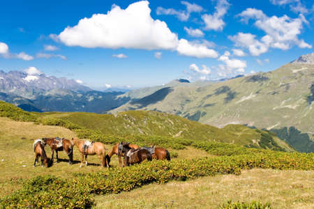 Mountain landscape with horses