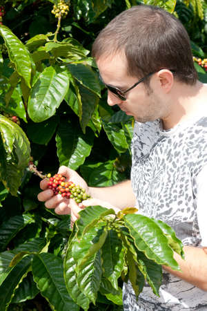 Farmer examining a mature of coffee beans photo