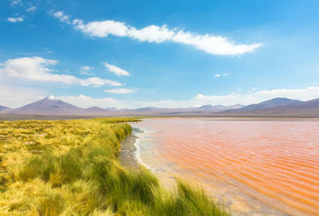 Bolivian altiplano landscape with coast of Laguna Colorada (Red Lagoon) photo