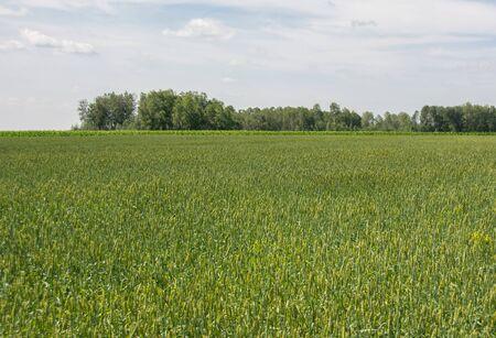farm field: Field crop farm sky beautiful view of human labor farmer