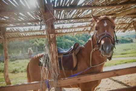 adentro y afuera: hermoso caballo marrón de pie en un corral en el verano