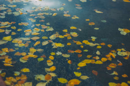 yellow leaves float in blue water. lake Stock Photo