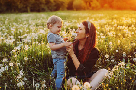 mother with a small child sits in a dandelion field at sunset