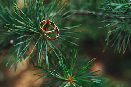 two golden wedding rings hanging on a pine branch