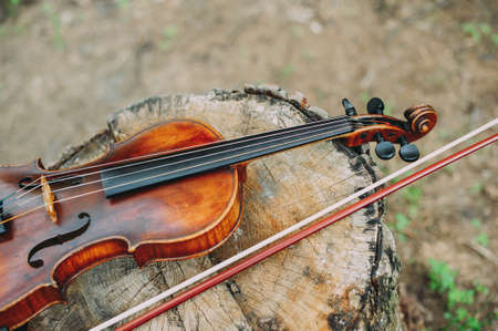 Beautiful wooden violin lying on the stump in the forest. Fragment of violin closeup Zdjęcie Seryjne