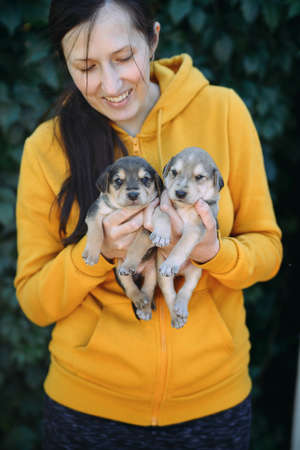 The girl with dark hair holds in hands two puppies Archivio Fotografico