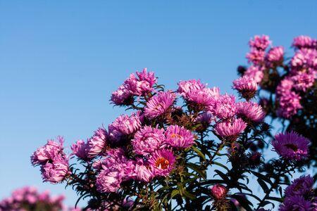 hoarfrost: Flowers in hoarfrost Stock Photo