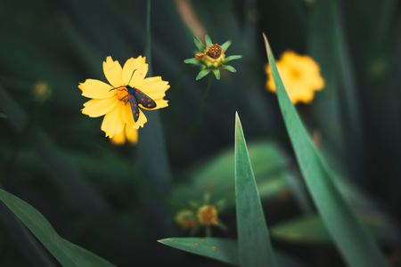 Macro photography with a little butterfly on yellow flowers Stock Photo