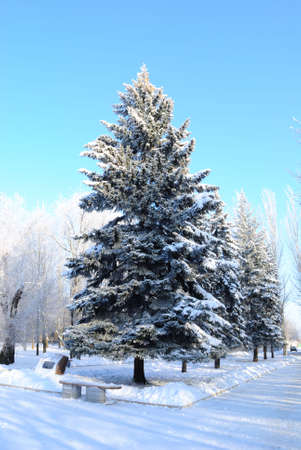 firry: The winter has come! Stock Photo