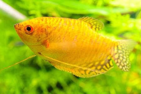 In an aquarium Reklamní fotografie