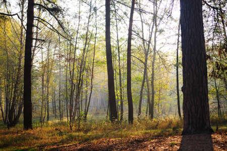 Morning wood Zdjęcie Seryjne
