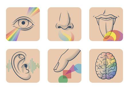 Conjunto de cinco sentidos humanos: vista, olfato, gusto, oído y tacto. Seis imágenes anatómicas: nariz, lengua, ojo, oído, dedo y cerebro. Ilustración de vector de órganos sensoriales