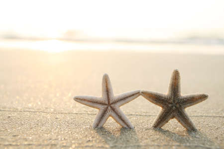 picture of starfish on the beach in the sand photo