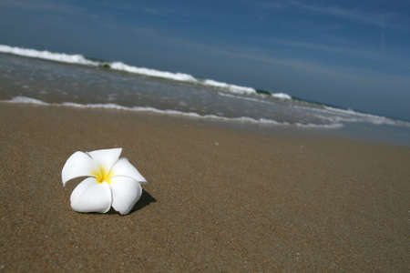 white beautiful flower lying on the sand at the beach photo