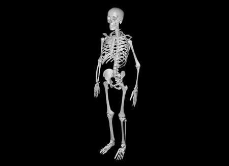 halloween skeleton: Skeleton on black background