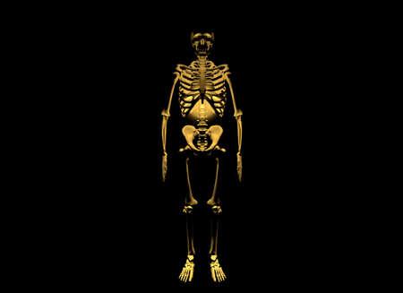 Skeleton on black background photo