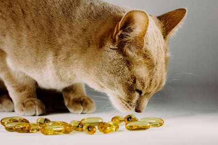 Orange cat curious about yellow pet pills. Vitamins for pets mockup. Animals COVID vaccine.
