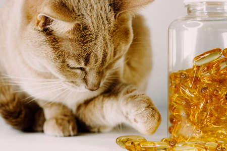 Orange cat curious about yellow pet pills trying to touch it with her little paw. Vitamins for pets mockup. Animals COVID vaccine.