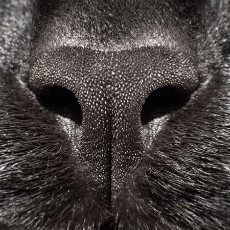 Close up photo of a black cats nose. Macro photo. Stok Fotoğraf